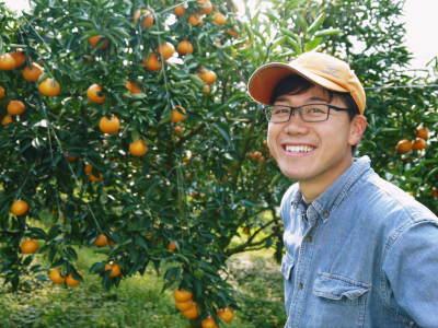 究極の柑橘「せとか」 平成31年度も大好評!今期発送予定分カウントダウンです!ご注文はお急ぎください!_a0254656_16551864.jpg