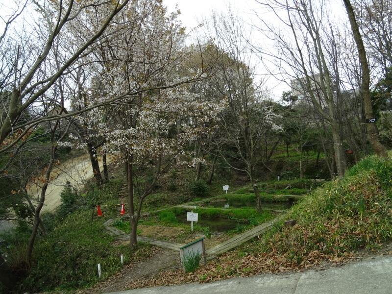 復旧した小川周辺の整備・・・うみべの森_c0108460_16221472.jpg