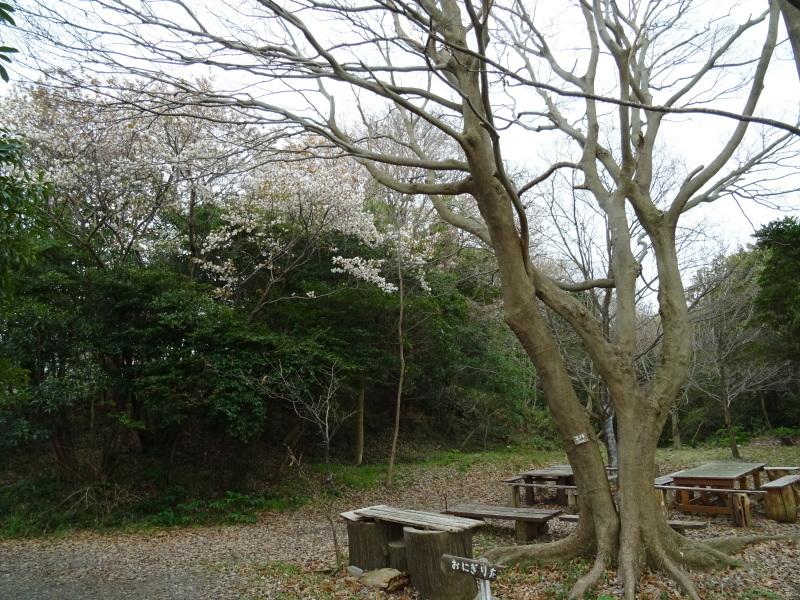 復旧した小川周辺の整備・・・うみべの森_c0108460_16230977.jpg