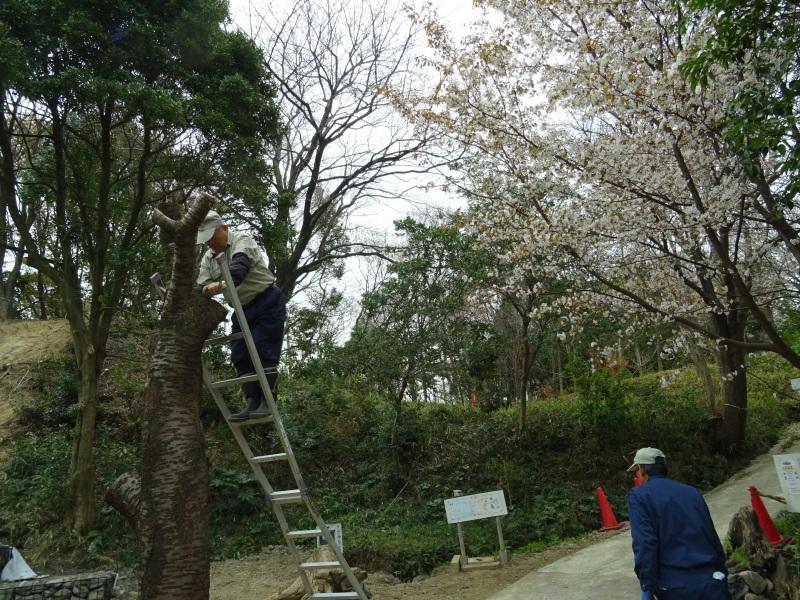 復旧した小川周辺の整備・・・うみべの森_c0108460_16365146.jpg