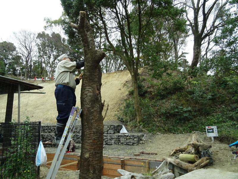 復旧した小川周辺の整備・・・うみべの森_c0108460_16365292.jpg