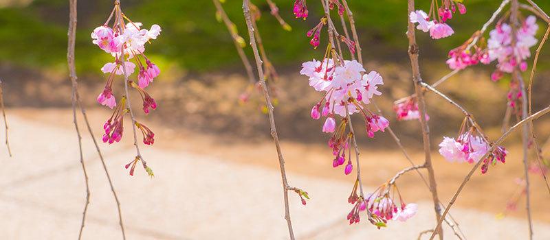 上野公園_a0155464_19414991.jpg