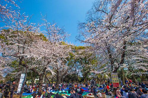 上野公園_a0155464_19470057.jpg