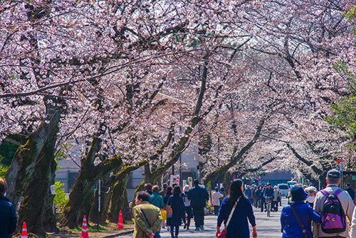 上野公園_a0155464_19472283.jpg