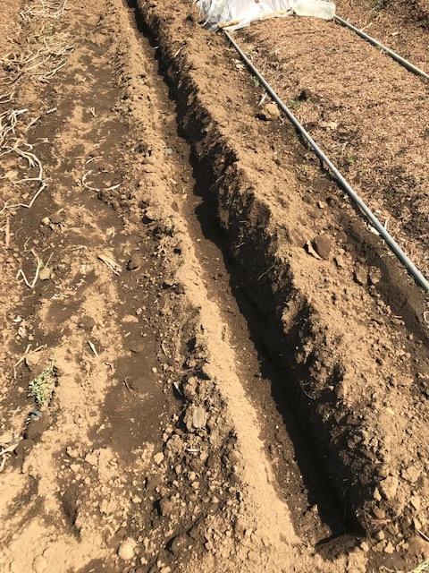 ジャガイモに再び不織布、トウモロコシなど発芽3・27_c0014967_10402991.jpg