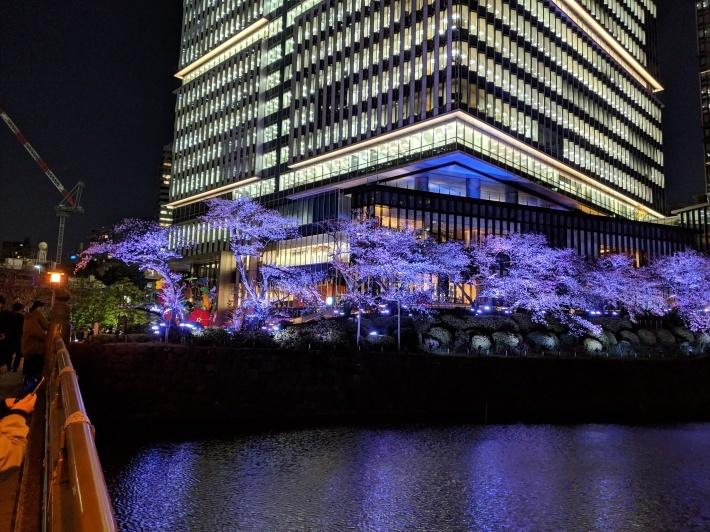 赤坂見附、夜桜_d0193569_08242541.jpg
