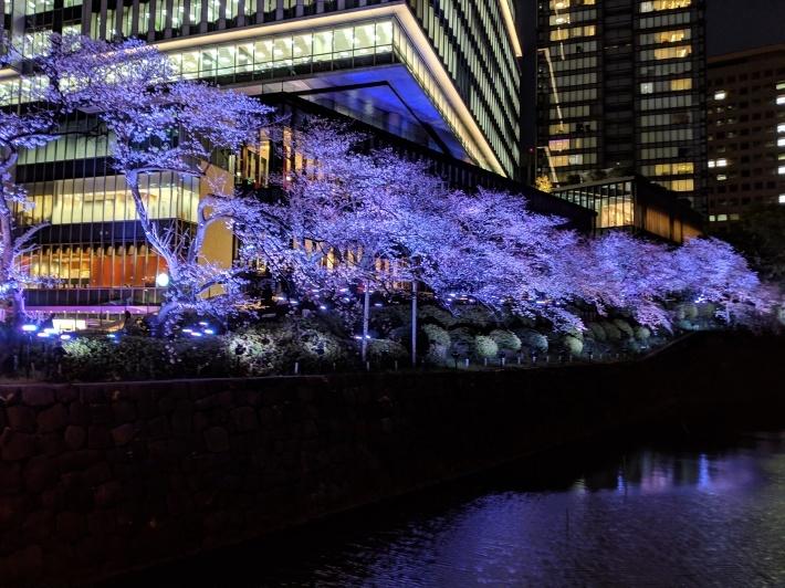 赤坂見附、夜桜_d0193569_08243004.jpg