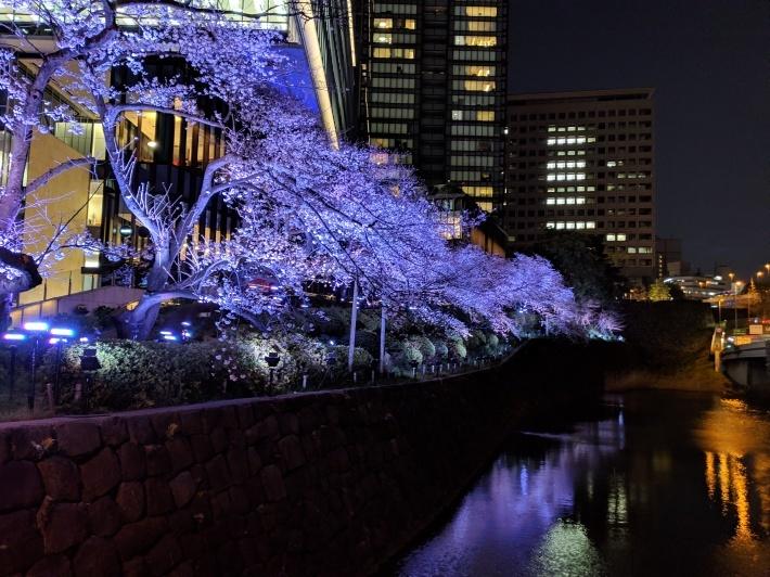赤坂見附、夜桜_d0193569_08244650.jpg
