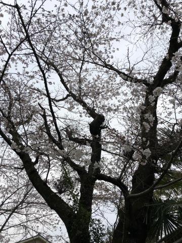春爛漫_d0073371_11433596.jpg