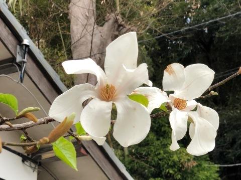 春爛漫_d0073371_11454515.jpg