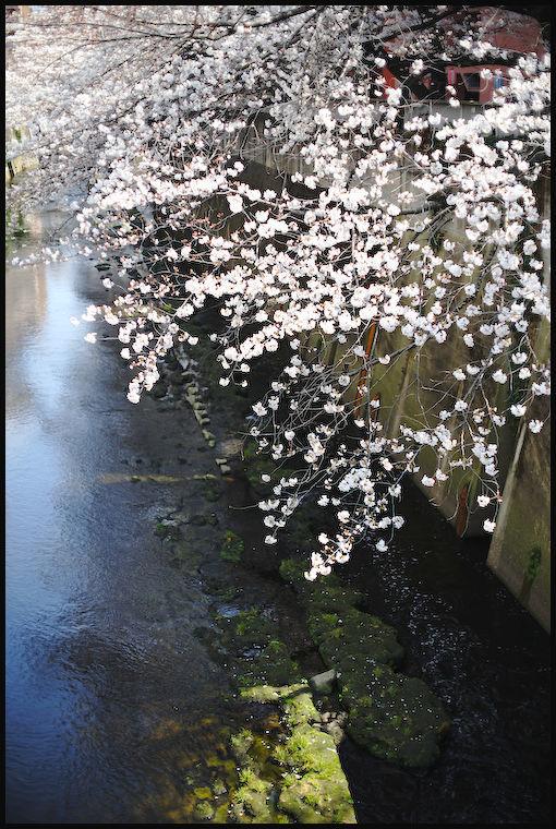 神田川 -2_b0340572_08182877.jpg