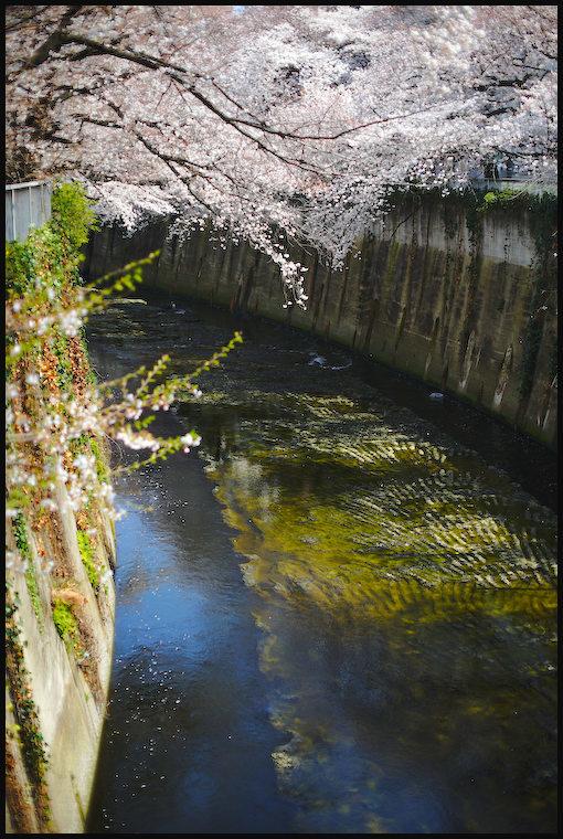 神田川 -2_b0340572_08184087.jpg