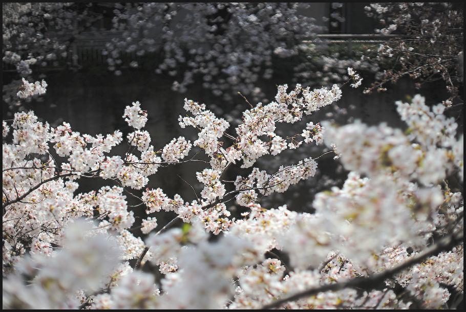 神田川 -3_b0340572_21592730.jpg
