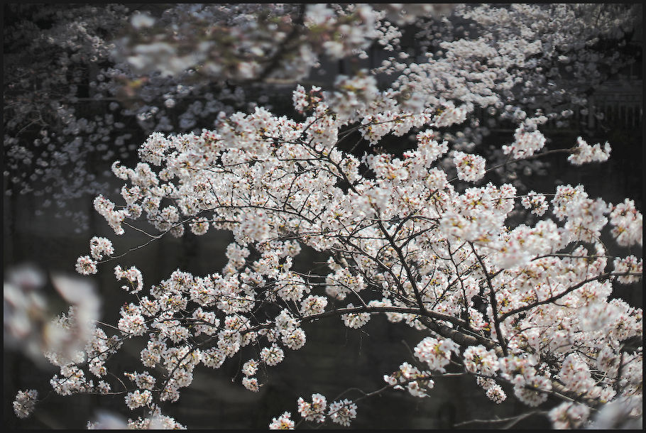 神田川 -3_b0340572_21593309.jpg