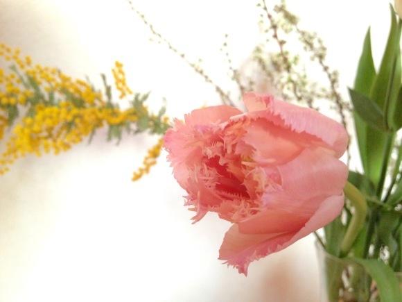 ピンク色の門出***_e0290872_23252716.jpg