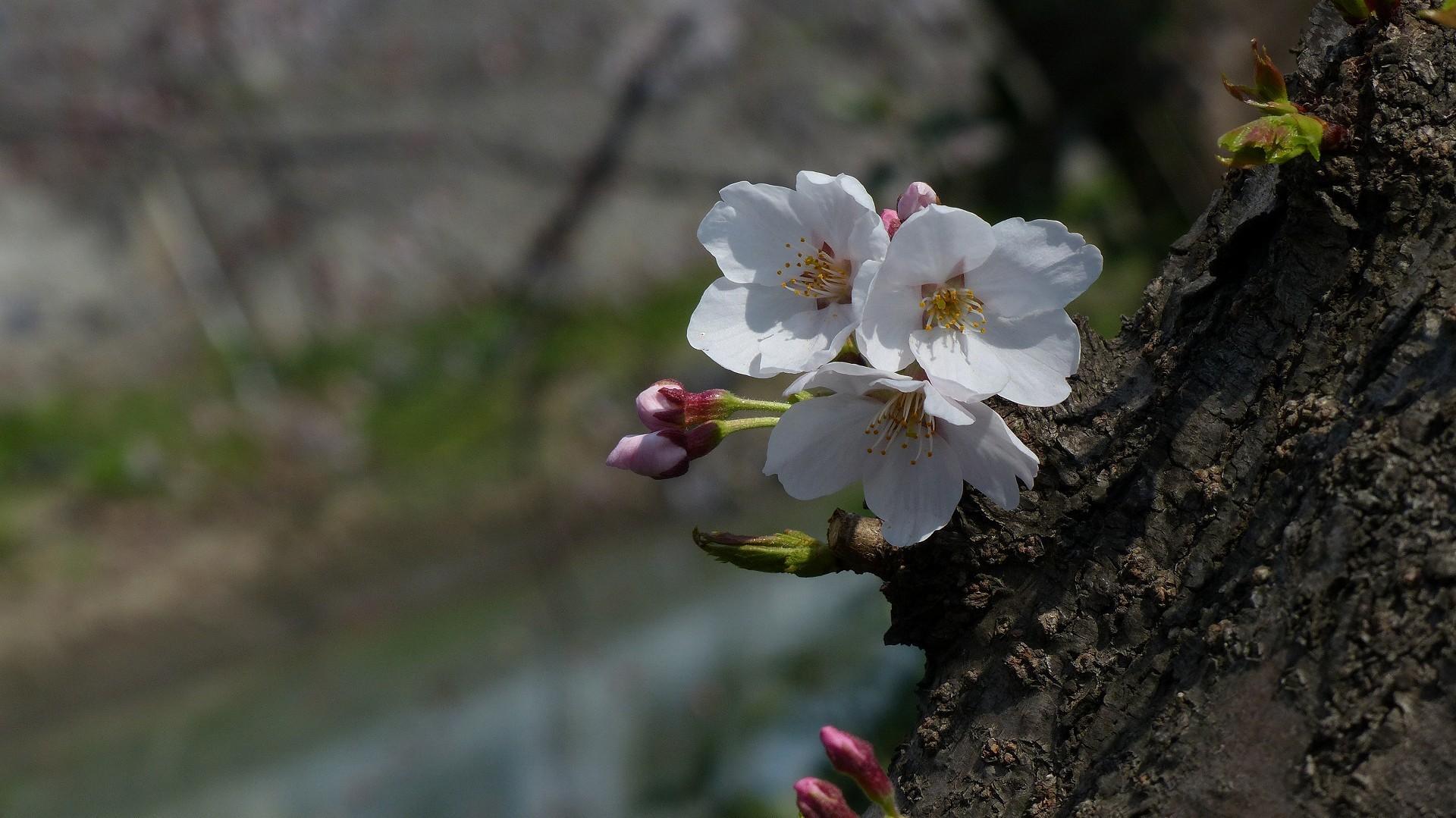 翔んで埼玉 【 2019 3/28(木) 】_a0185081_14033366.jpg