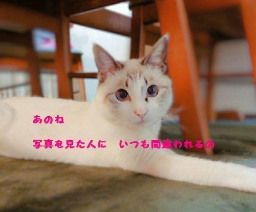 b0061787_22011667.jpg