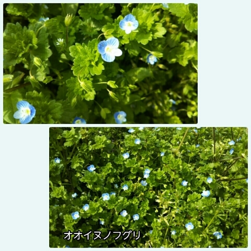 a0143388_20595757.jpg