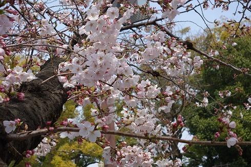 徳川園_a0152501_06545503.jpg