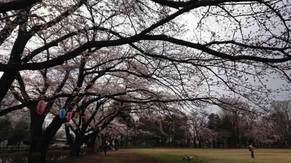 2019東京の桜_b0042308_01375814.jpg