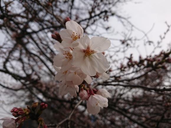 2019東京の桜_b0042308_01381408.jpg