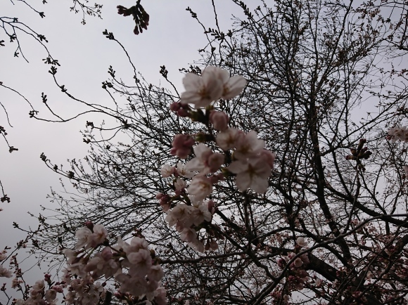 2019東京の桜_b0042308_01381598.jpg