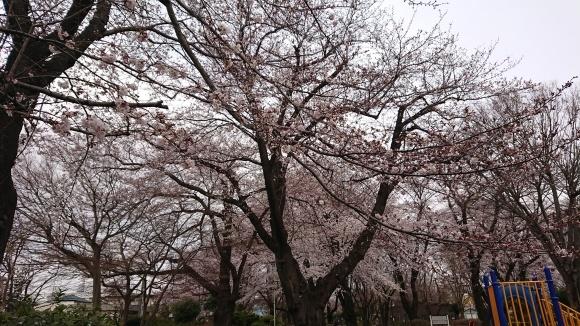 2019東京の桜_b0042308_01384401.jpg