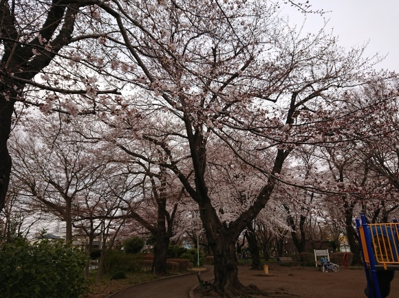 2019東京の桜_b0042308_01384686.jpg