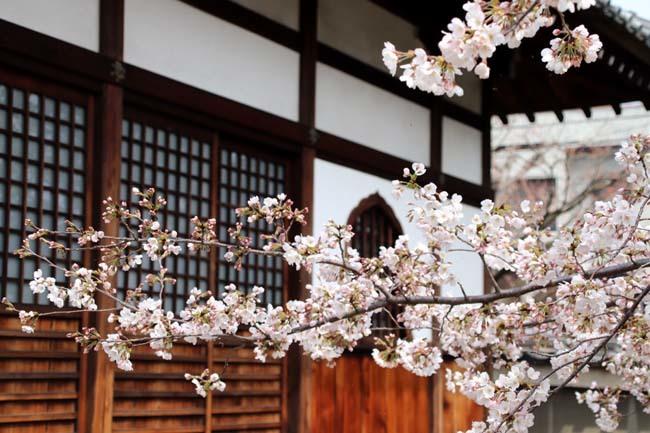 枝垂れに続いてソメイヨシノ 上品蓮台寺_e0048413_21003913.jpg