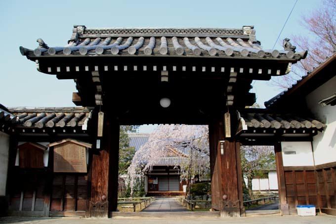 枝垂れに続いてソメイヨシノ 上品蓮台寺_e0048413_21012411.jpg