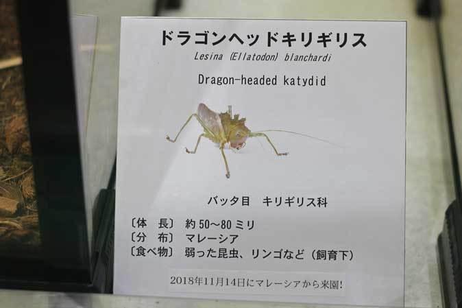 昆虫園本館にドラゴン現る!!(多摩動物公園)_b0355317_22401034.jpg