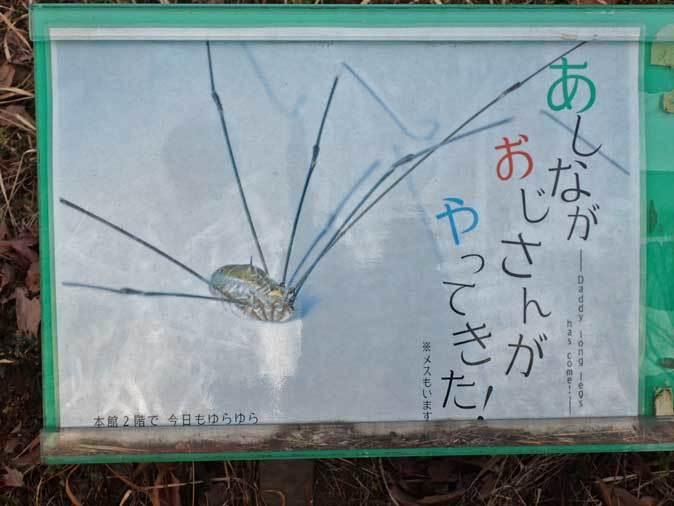 昆虫園本館にドラゴン現る!!(多摩動物公園)_b0355317_22494152.jpg