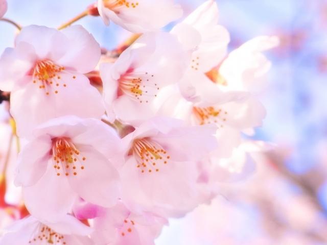 【今月のブログテーマ】4月のテーマはこれ!_f0357923_15493550.jpg