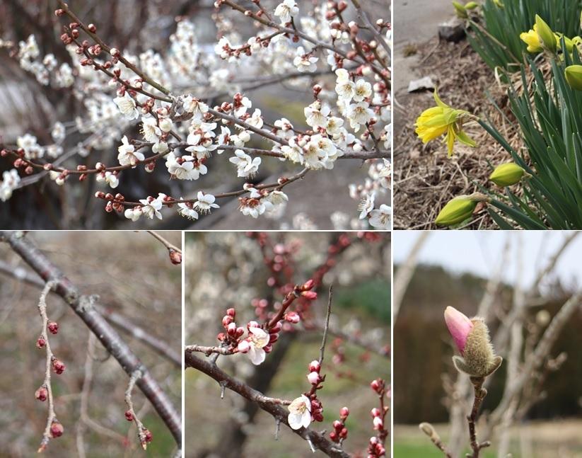 花と蕾の状況です_a0212730_14033814.jpg