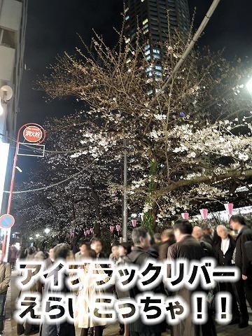 夜桜2019_c0062832_01083643.jpg