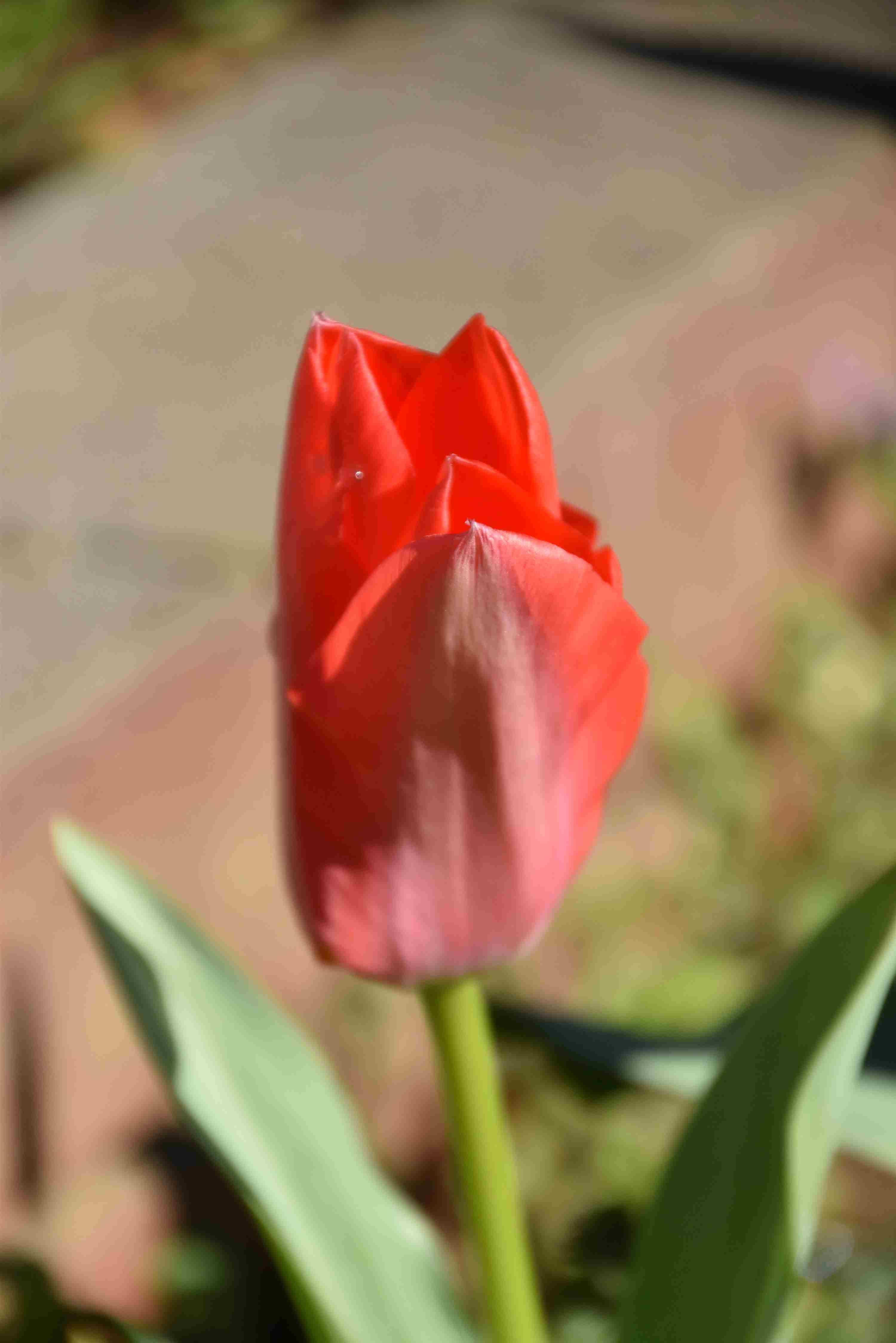 開花時期の調節_d0338347_08052518.jpg