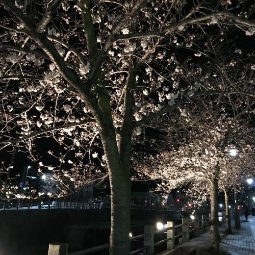 桜 2019_b0290049_23271824.jpeg