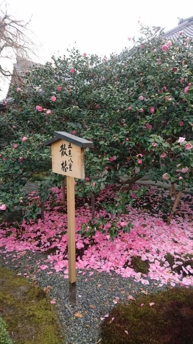 次は枝下桜の出番~_c0194552_20321675.jpg