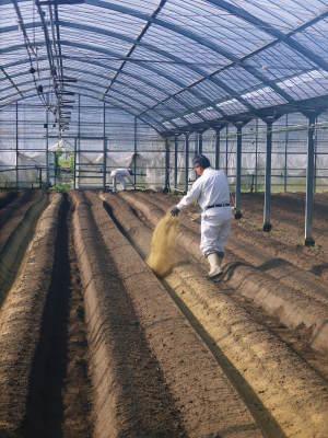 樹上完熟の朝採りトマト 平成31年度も6月上旬より出荷予定!苗床の様子とこだわりのトマトについて!_a0254656_17133257.jpg