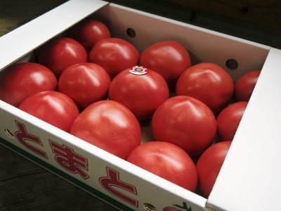 樹上完熟の朝採りトマト 平成31年度も6月上旬より出荷予定!苗床の様子とこだわりのトマトについて!_a0254656_17481120.jpg