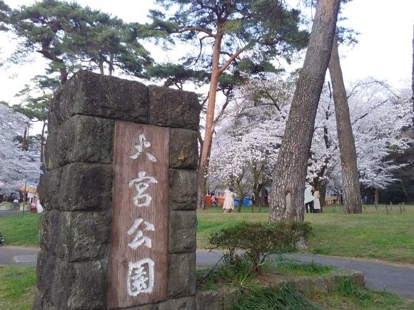 夕暮れ間近の桜風景_d0116059_20463152.jpg