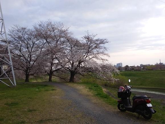 夕暮れ間近の桜風景_d0116059_20562660.jpg