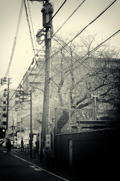 町田で桜_d0349265_21060049.jpg