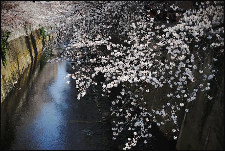 神田川 -4_b0340572_22361001.jpg