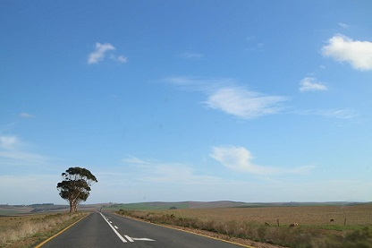<南アフリカワイン旅行記>南アの文化-そのほかいろいろ-_b0016474_18145068.jpg