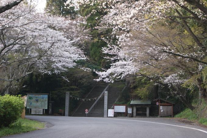 柞原八幡宮『桜』開花宣言 ③_f0191383_08100012.jpg