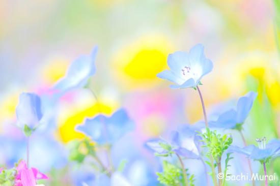 さち色フォト講座 ー春を写そう②ー募集します_c0073387_19443869.jpg