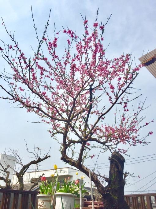 荒庭にも春の訪れ_e0385587_22471180.jpeg