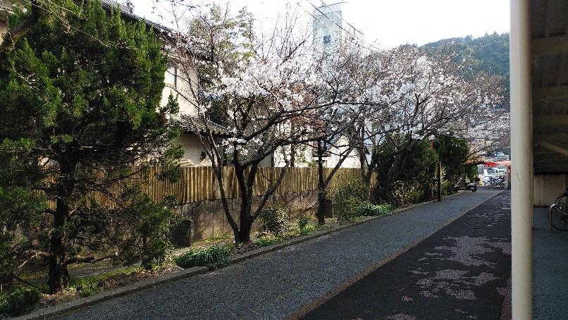 桜咲く なんて季節に..._f0237788_21365202.jpg