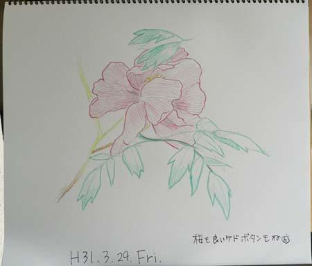 華晴苑の牡丹もよろしく_b0364195_09211904.jpg